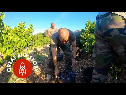 Visiting a French Winery Run by Veterans