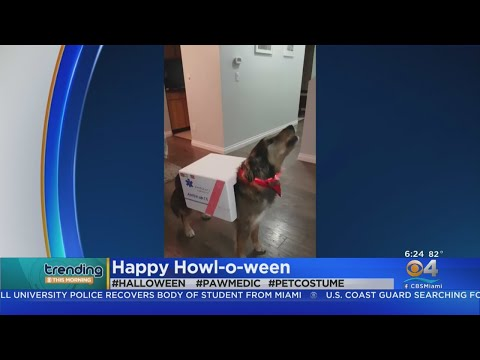 Trending: Dog In Ambulance Costume