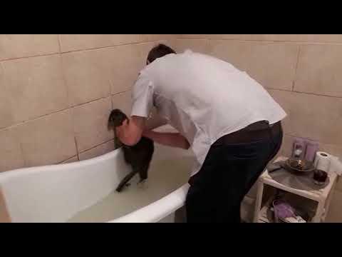 My cat hates a bath