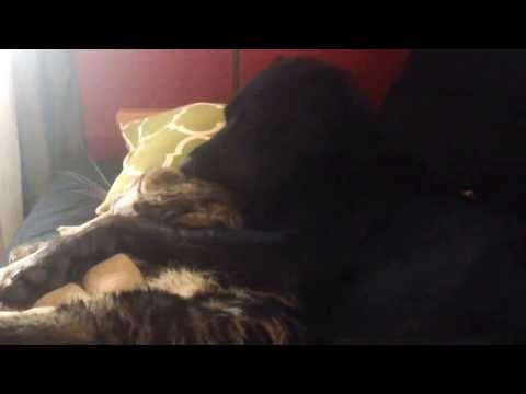 Spooning Dog And Cat Pair Is Exactly What The World Needs Right Now