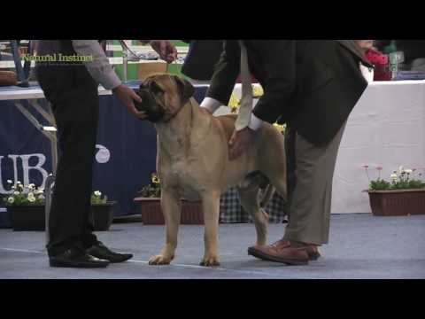 Scottish Kennel Club 2016 - Working group FULL