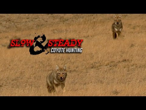 Slow And Steady - Coyote Hunting