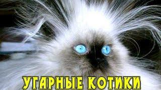 Приколы с кошками и котами #8. Подборка смешных и интересных видео с котиками и кошечками