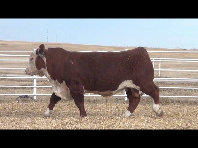 Express Ranches Lot 217