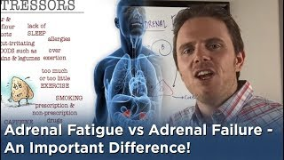 Adrenal Fatigue vs Adrenal Failure - An Important Difference!