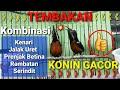 Konin Gacor Full Tembakan Suara Tajam Nyaring Untuk Masteran Full Isian  Mp3 - Mp4 Download