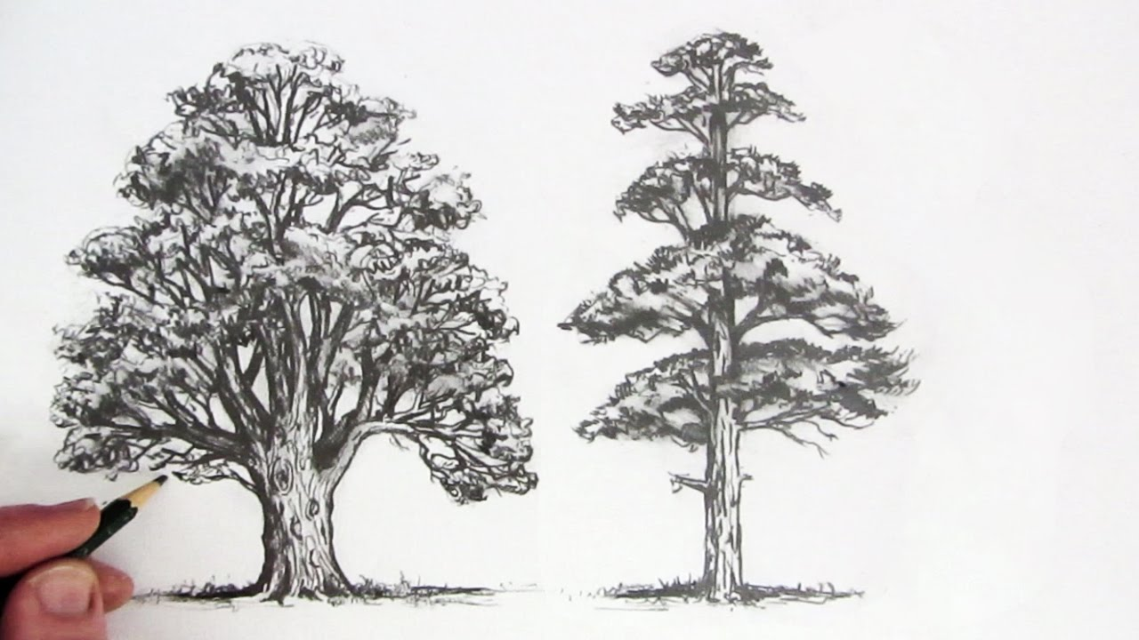 Merveilleux How To Draw Trees