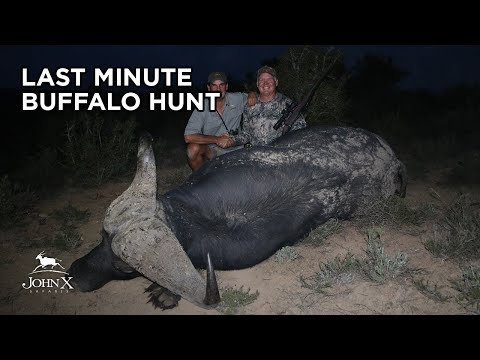 Buffalo Hunting With DFW | Gunwerks Skuhl | John X Safaris