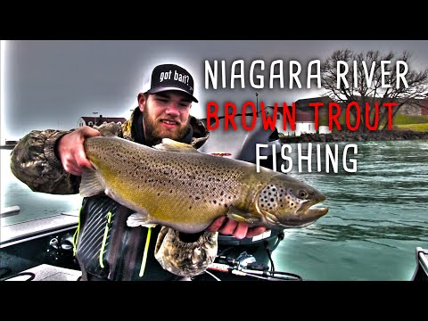 World Class Niagara River Brown Trout Fishing