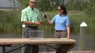 170 Salt Marsh Wildlife