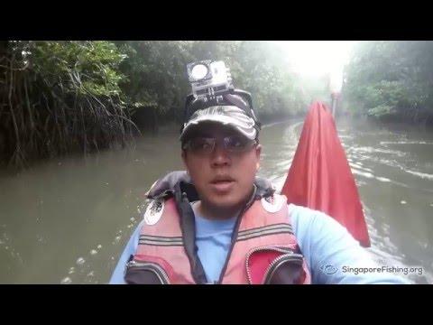 4D3N Kayak Camping & Fishing at Mamam Beach, Pulau Ubin, Singapore - Mangrove trail