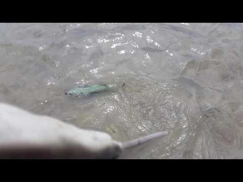 Mackerel Rescue at Raven Point - Wexfordhub.ie