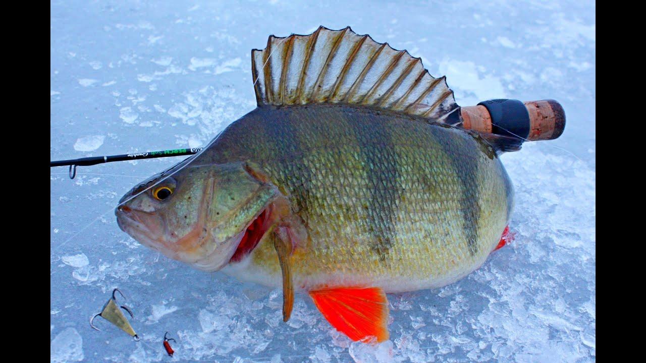 Ловля окуня зимняя рыбалка