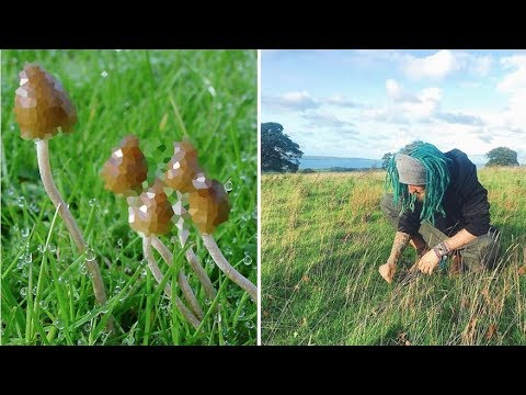 Mushroom Picking Guide 🍄 (Liberty Caps)