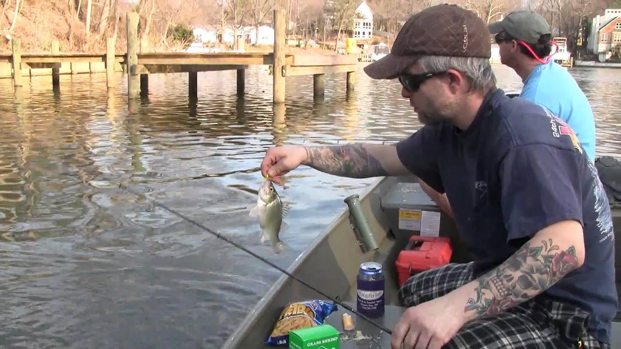 Perch fishing on the magothy river in pasadena maryland for Fishing in md