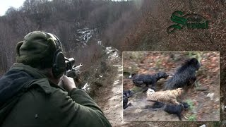 Wild Boar hunting in Bulgaria - part 2