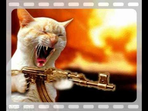 CAT USING A GUN..!! SHOOTS NEIGHBOURS DOG FATAL DEATH CAT ...