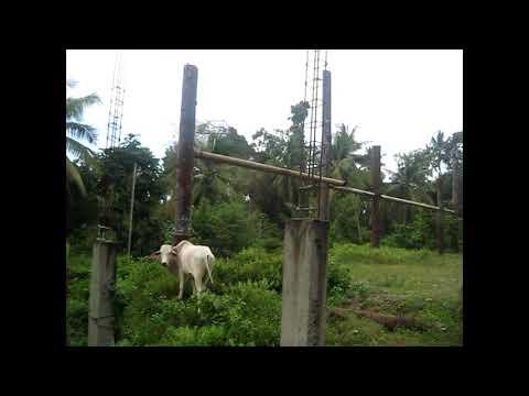 Mindanao Travel Blog Post #6: Iligan Paradise Resort and Eco-Park Phase One