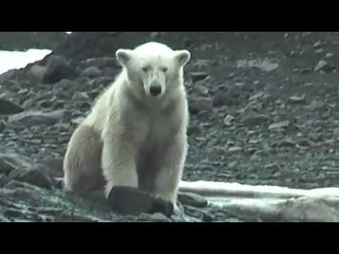 Spitsbergen Islands-Arctic Expedition.Full HD