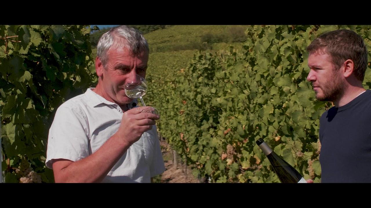 Allimant-Laugner, Vins et Crémants d'Alsace à Orschwiller