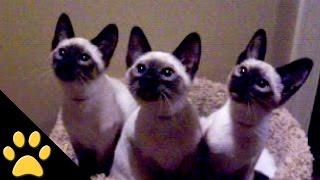 National Cat Day! - AFV Animals