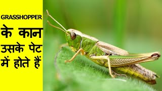 Most Amazing Facts in Hindi | Interesting and Unknown Facts about ...