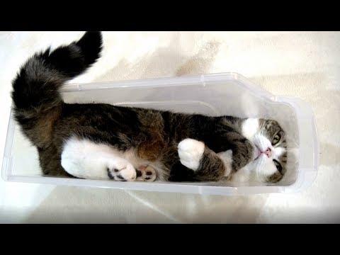 スリムなプラケースとねこ。-The slim plastic case and Maru-