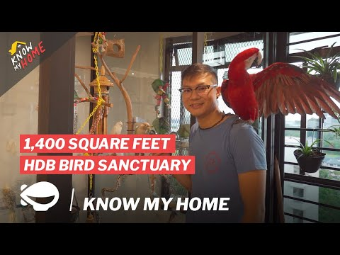 This Man Built A Bird Sanctuary In His 1,400 Square Feet HDB   Know My Home