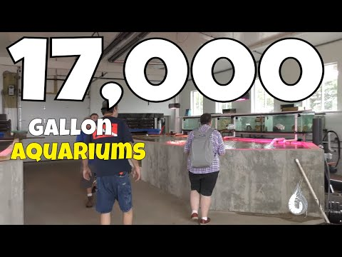Two 17,000 Gallon Aquariums on a Private Farm - Largest Aquarium I've Seen w/ Aquarium Co-Op