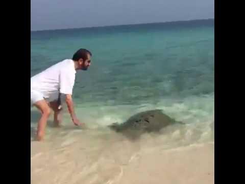شاهد محمد بن راشد يداعب سلحفاة ضخمة على شواطئ دبي