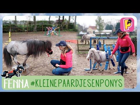 Kleine paardjes en pony's | Fenna | PennyTV