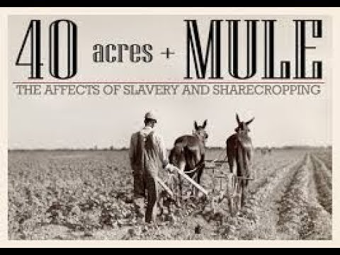 The hidden-Truth Behind '40 Acres and a Mule'