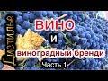 watch he video of 🍷Вино и виноградный бренди🍇