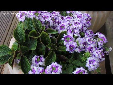 Rośliny Do Donicy Na Sezon Letni