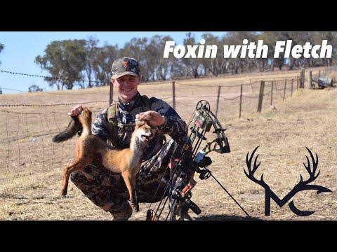 Bow Hunting - Red Fox (Australia)
