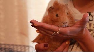 видео Какое животное завести в квартире
