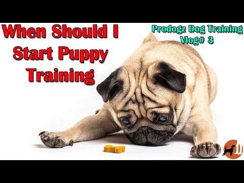 Prodogz Dog Training Vlog #3: What Age Should Training Start