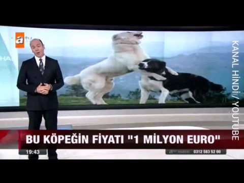 Bu Köpeğin Fiatı
