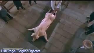 Best Scene of Kung Fu Chefs...war