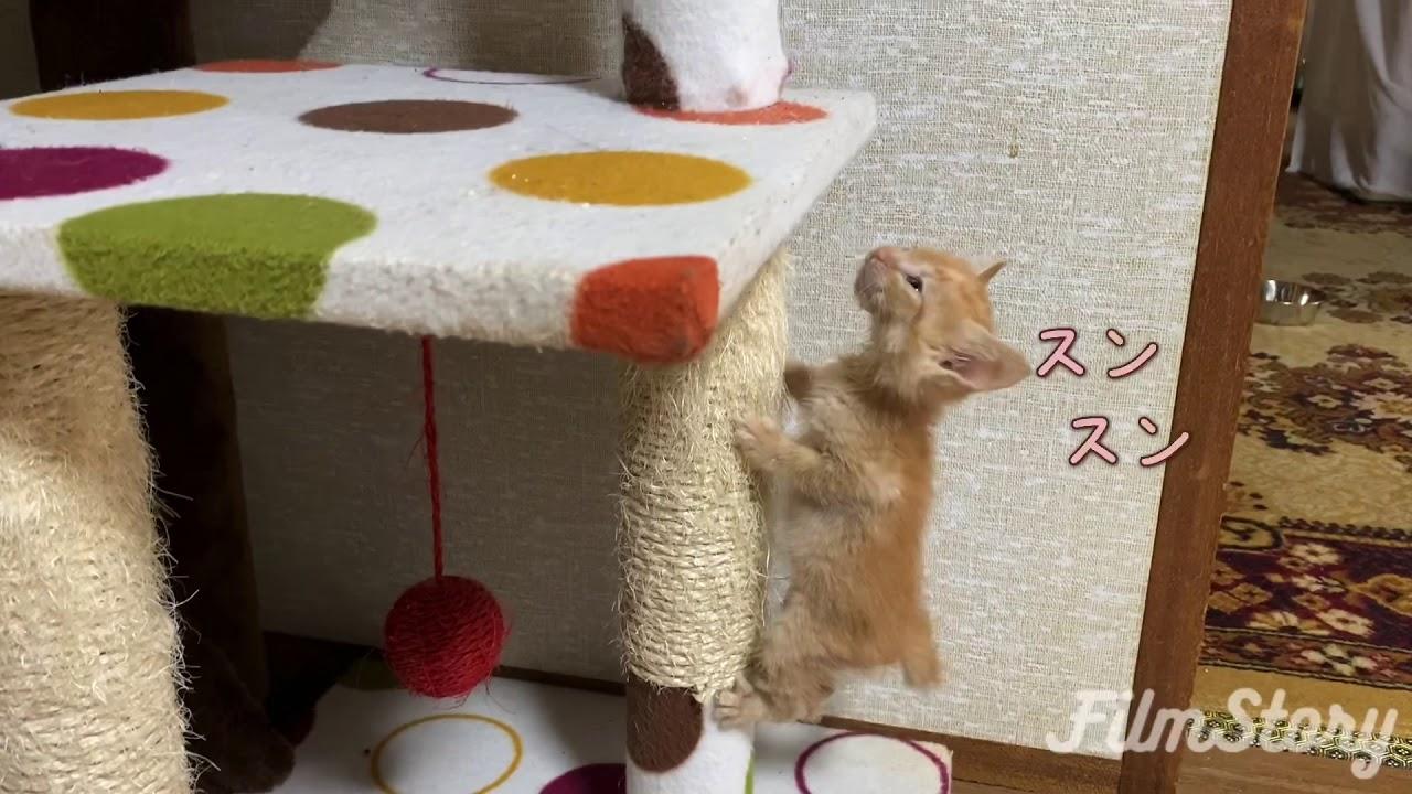 【保護猫リク】感動!元気に動き回れるようになったよ。(いるまん保護動物シェルター)