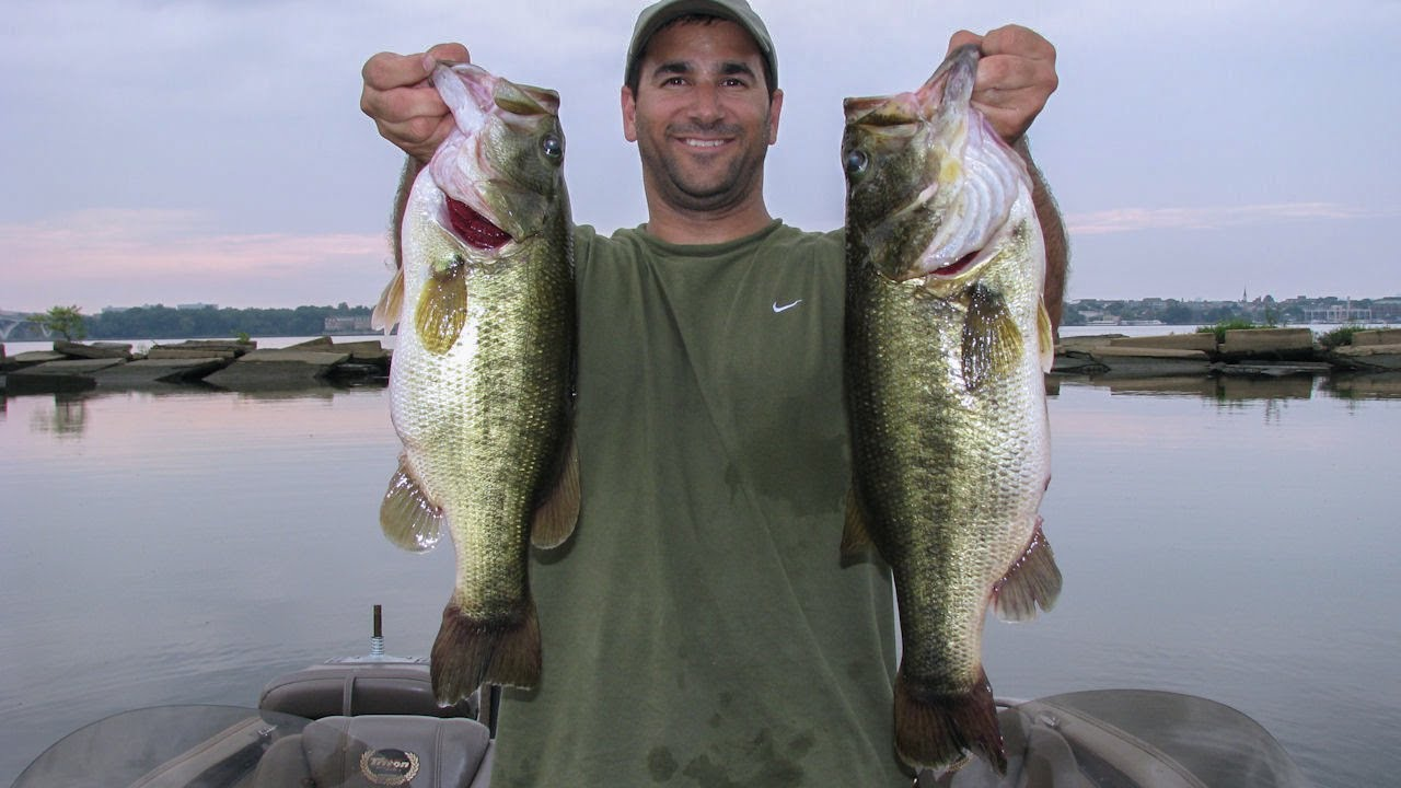 Potomac river bass fishing 8 pounder with dnr tag for Potomac river fishing report