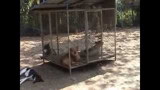 Care for Dogs ,,Dog Rescue Chiang mai  Thailand,,