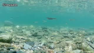 (수중촬영) 액션캠 물속은 평화롭다