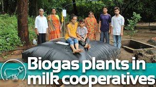 NDDB and Sistema.bio India transforming cowdung into biogas