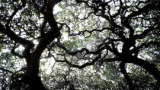 Bajo el cielo de Milkwood de DYLAN THOMAS