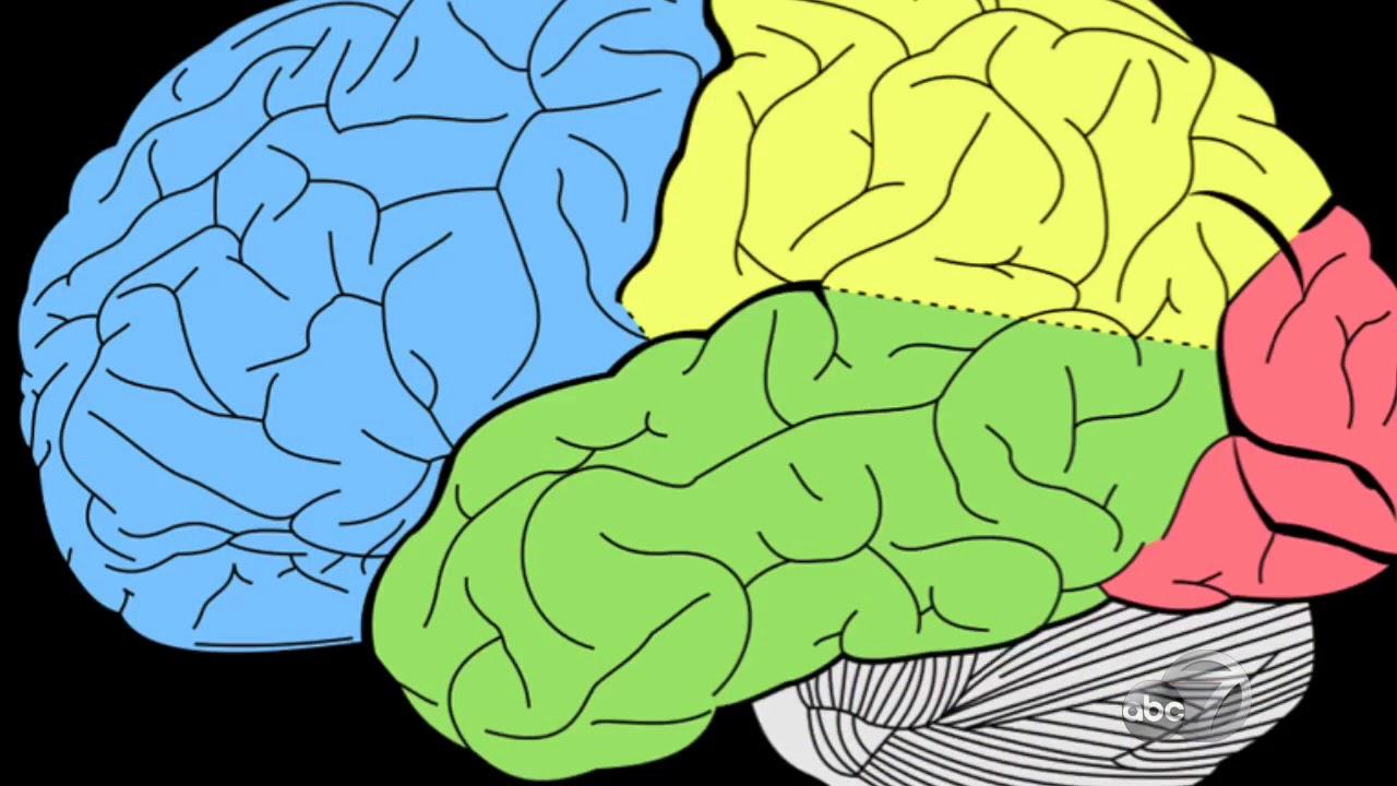 Лобные доли мозга в картинках