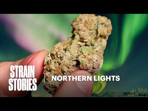 Northern Lights | Strain Stories