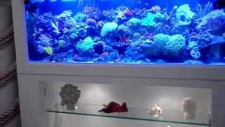Custom Made Aquariums Large Comercial & Home Fish-tanks