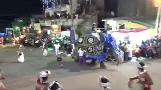 Elephants trample crowd at Sri Lankan pageant, injuring 17