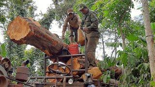 Mơ vlogs 8 xe công nông chở gỗ muông với cây chôm chôm